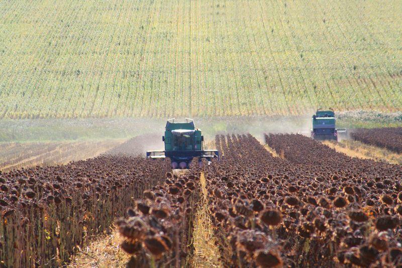 trăgând durerea în agricultură