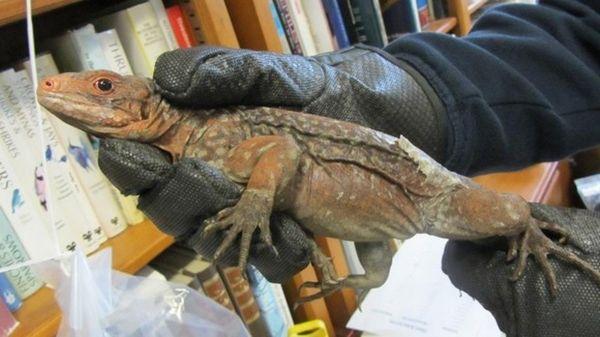 """Semnele sfârșitului lumii: A """"plouat"""" cu reptile! Panică în Statele Unite"""