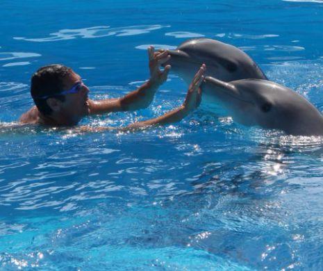 femeie datând delfin