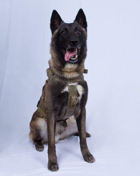Câinele de care n-a scăpat liderul ISIS