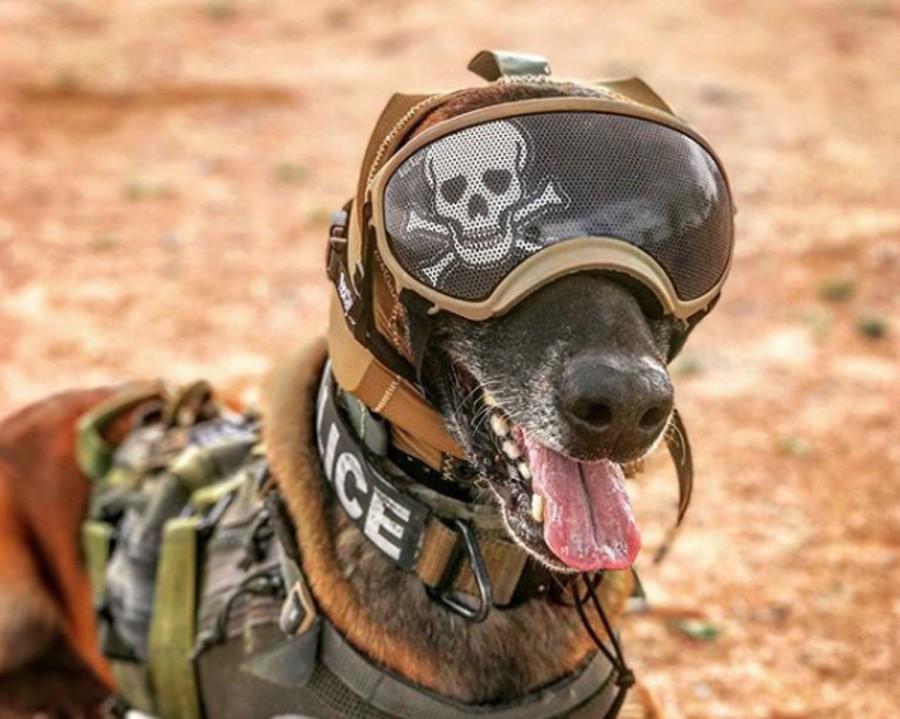US Army face căști de protecție auditivă pentru câinii de luptă