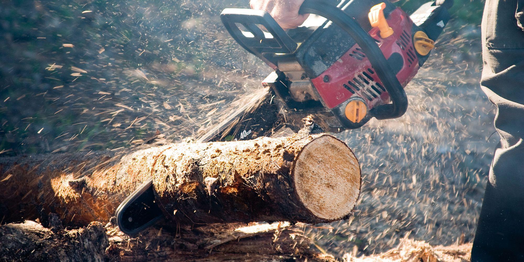 MAE confirmă: români morți în condiții suspecte în exploatări forestiere din Austria. Se vorbește de nouă cazuri