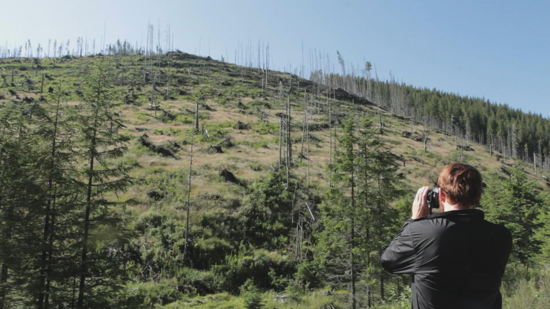 """""""Wood"""", filmul documentar care investighează tăierile ilegale de păduri din România"""