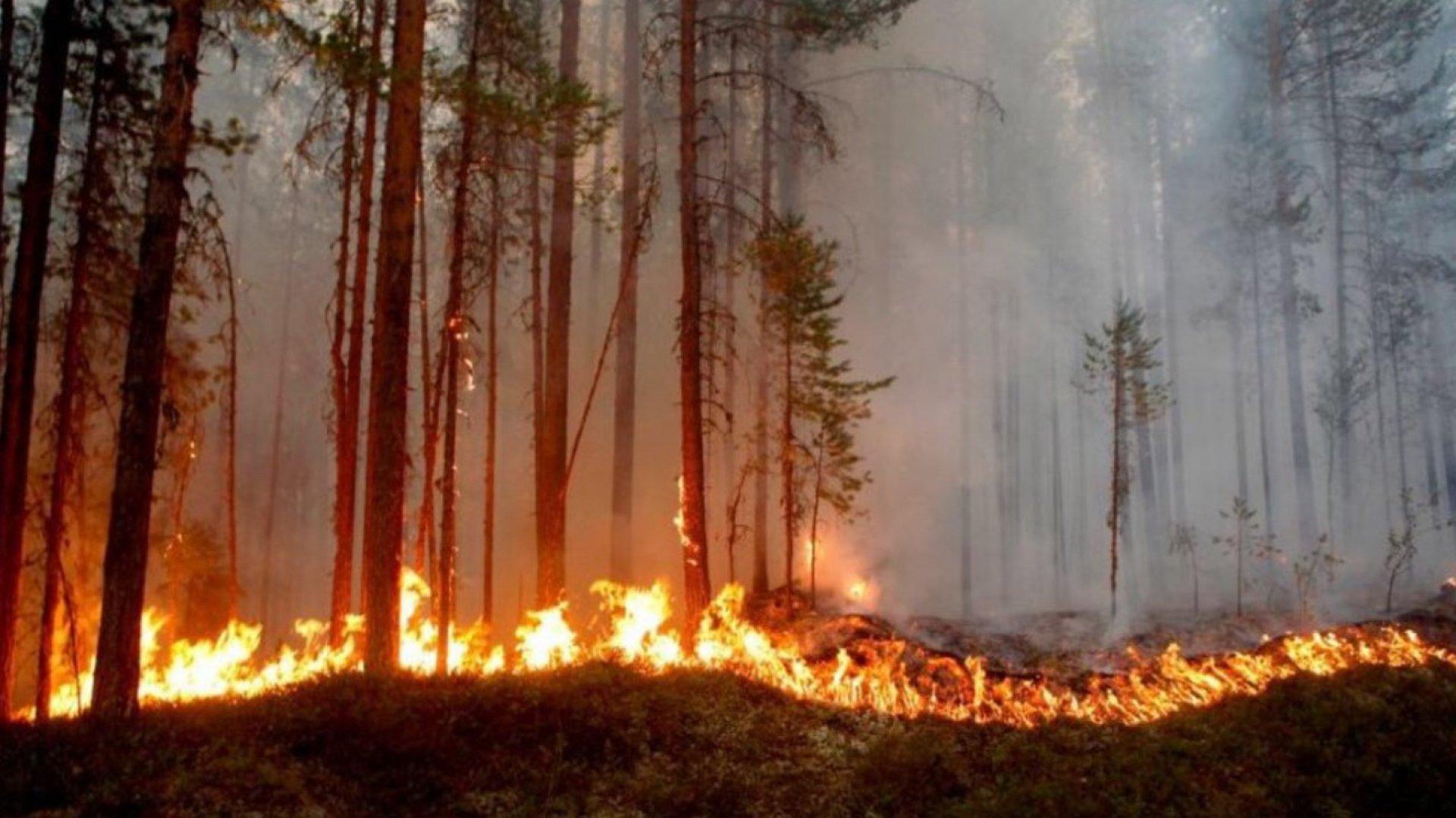 Incendiu puternic în Dobrogea. Pădurea de la Vadu Oii, făcută scrum