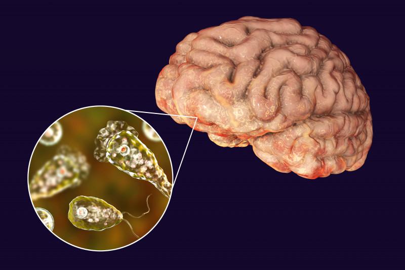 E înfiorător ce s-a găsit în rețeaua de apă! Un microb care se hrănește cu creierul uman